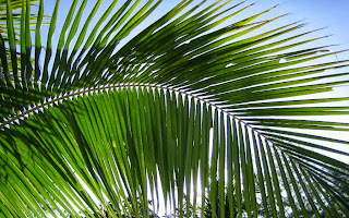 ODD WORLD! Teenager In Court For Stealing Five Bunches Of Palm Leaves