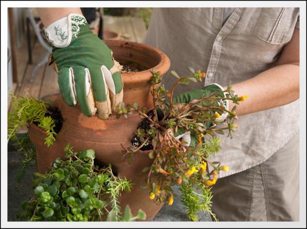 кофейный жмых как удобрение для комнатных растений отзывы