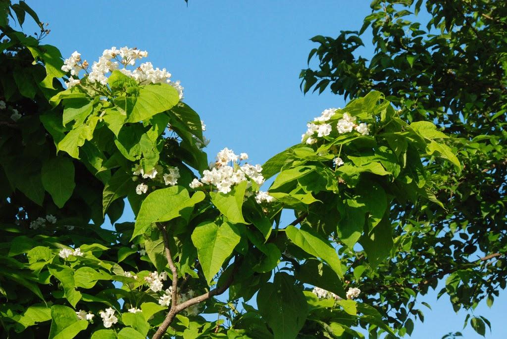 Tree leaves of kansas reanimators