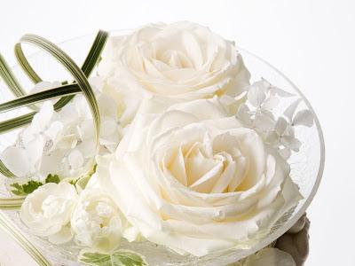 Великолепные белые розы
