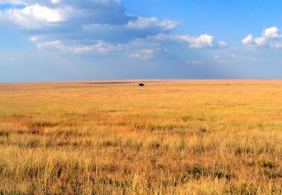 Serengeti, Tanzania, Africa by JoseeMM