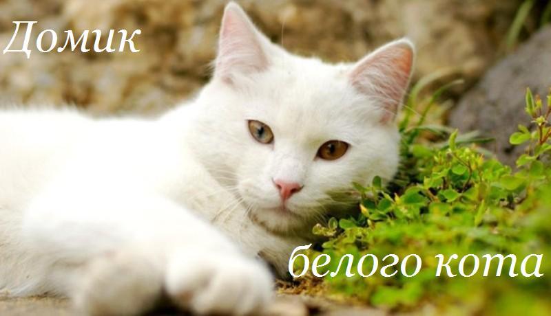 Домик Белого Кота