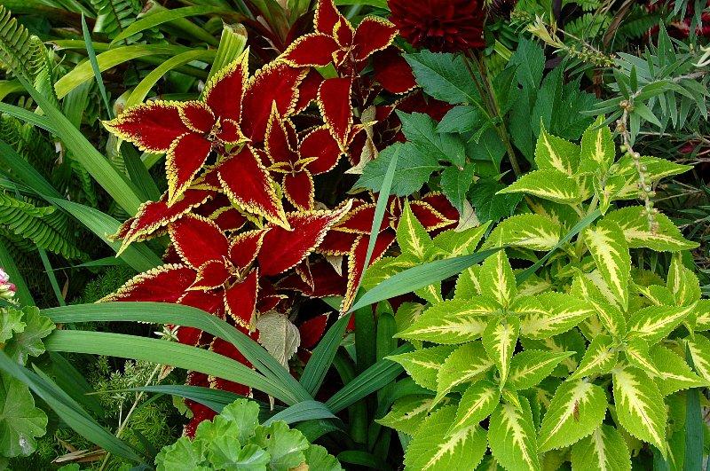 Floraciones en m laga y m s floraciones de mi jard n mayo for Jardines sin plantas