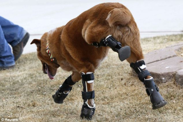 paw planet: World's First Dog with a Bionic Legs