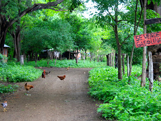 A typical neighborhood street in Playa Gigante. With three chickens in the path.