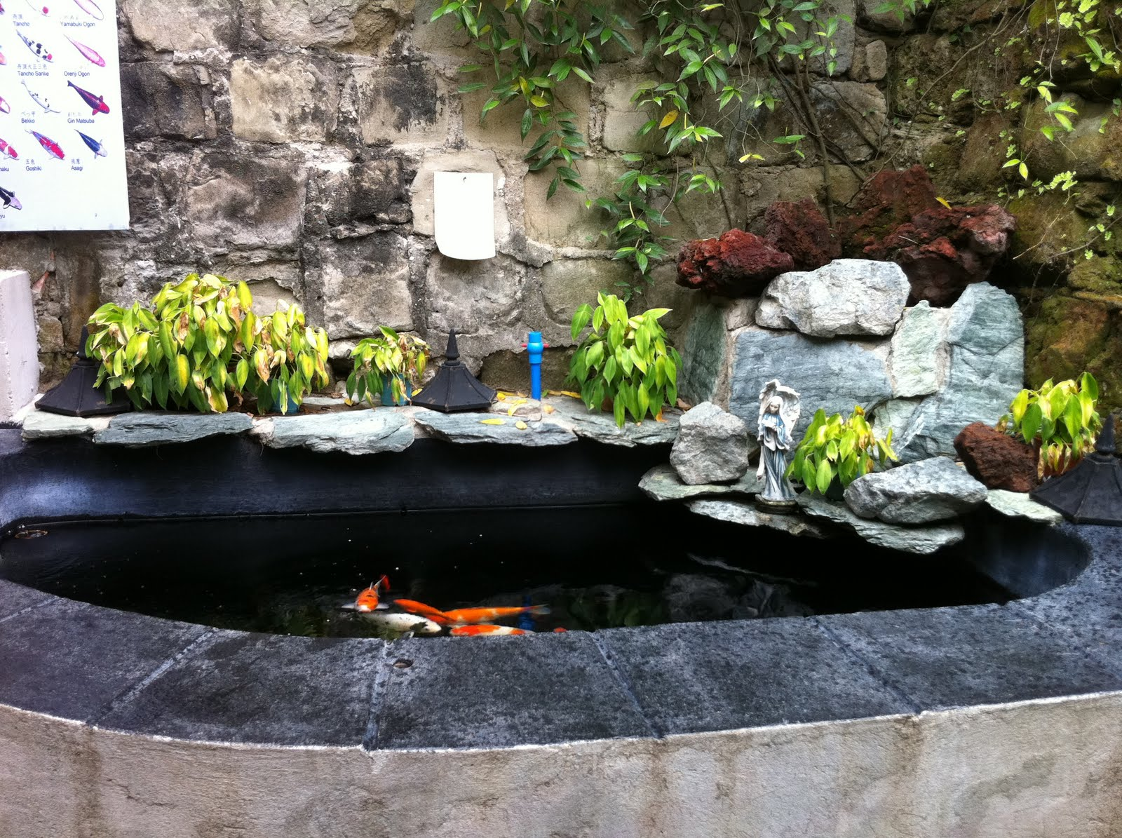 Projects the koi pond and the aviary for The koi pool