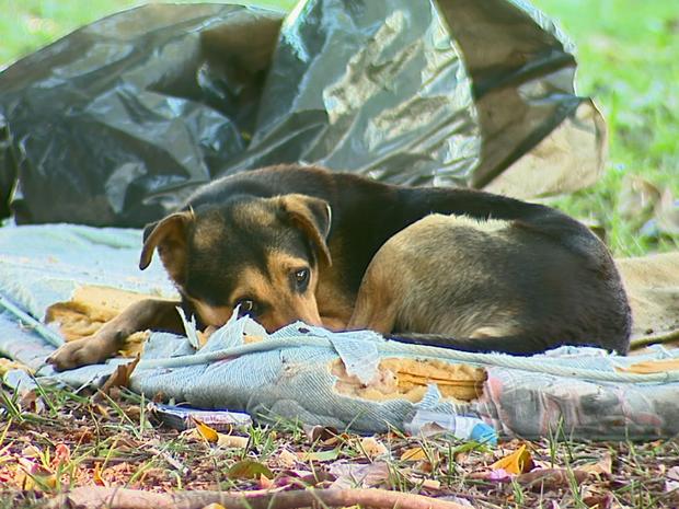 Cão protege colchão e uma sacola com roupas de um morador de rua (Foto: Reginaldo dos Santos / EPTV)