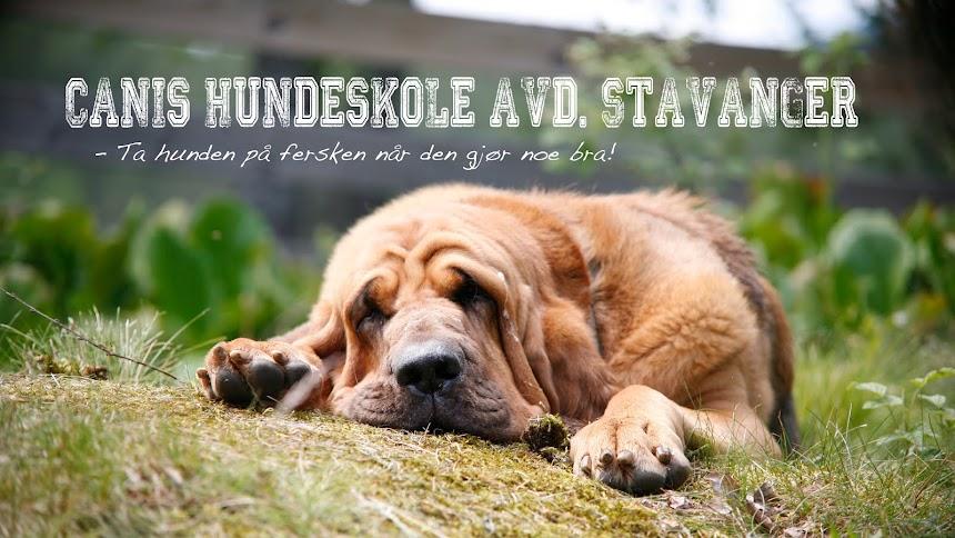Canis Hundeskole avd. Stavanger