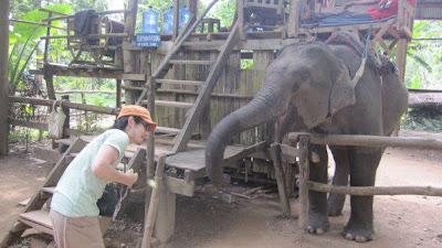 象に餌やり(ルアンパバーン)
