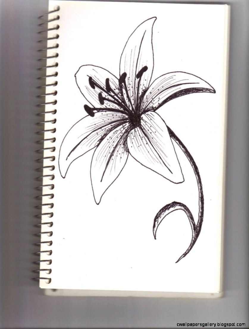 Lilies drawing   Google Search  Flowers  Pinterest  Tiger