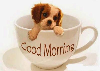 dogy-says-good-morning