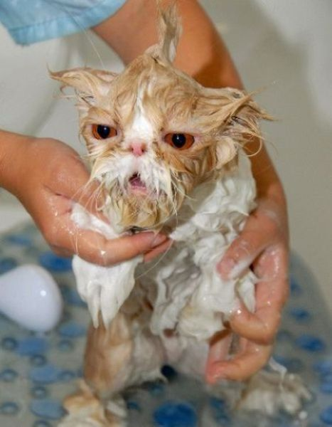Animal molhado estranho