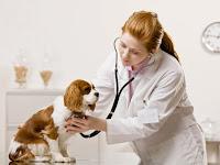 clinica veterinaria mallorca