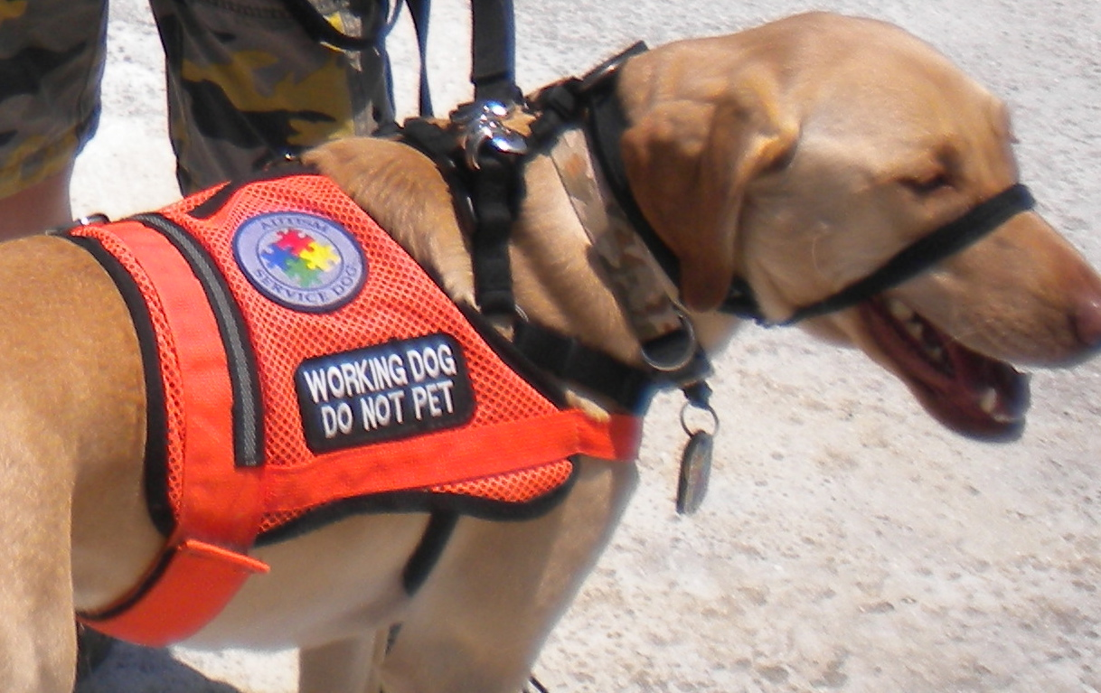 What Do Service Dogs Do For Autism