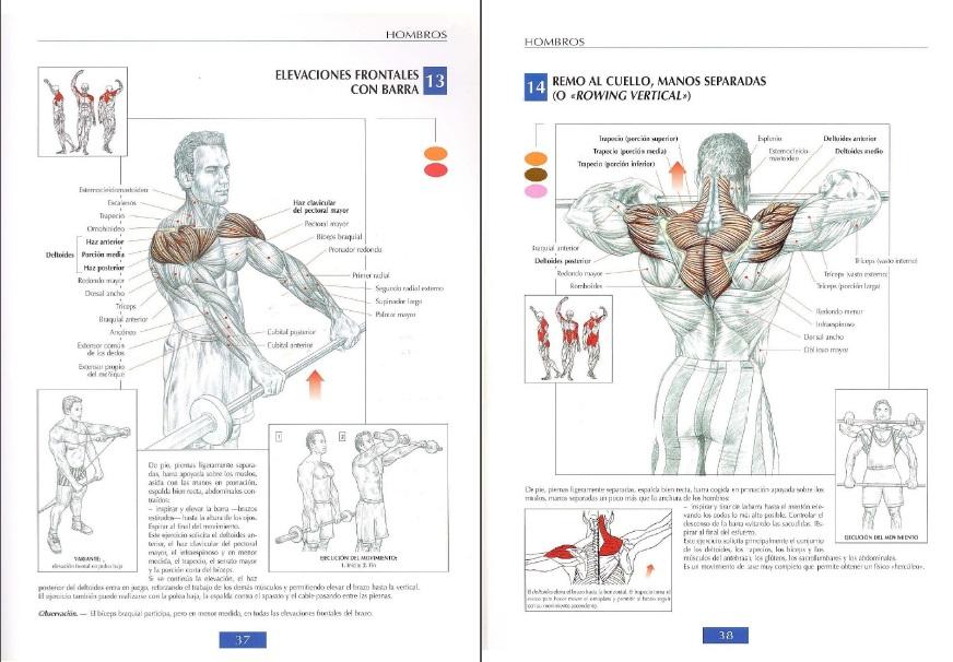 Lo Que Encuentre: Guía de los Movimientos de Musculación