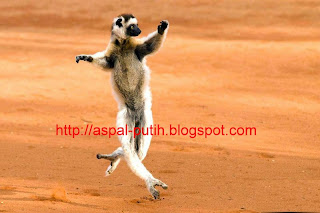 kungfu-lemur
