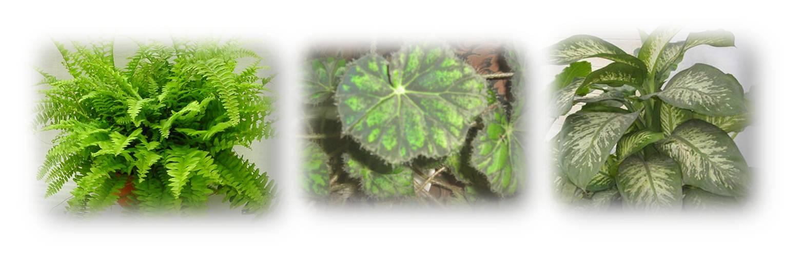 Catalogo orquideas del tequendama plantas ornamentales for 2 plantas ornamentales