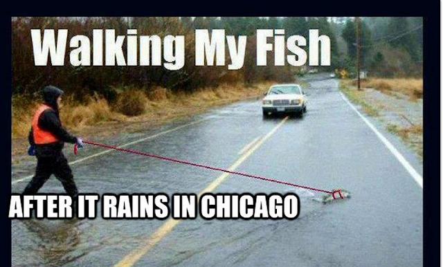 Chicago Memes #2
