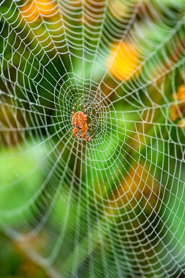 Nova Scotia; Spider; Webs