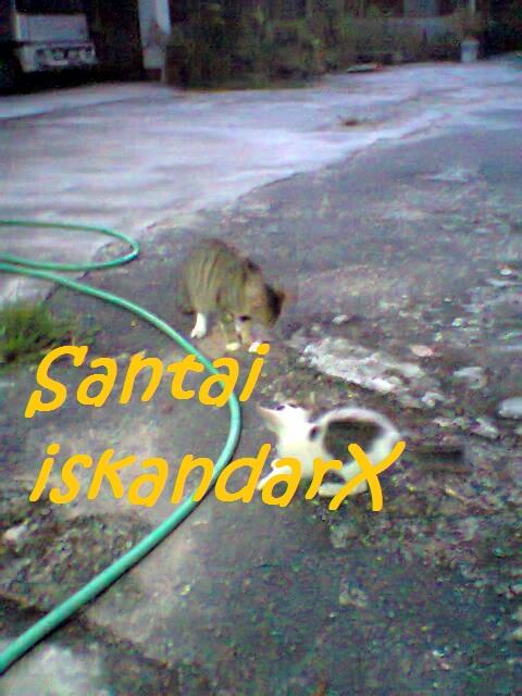 iskandarx.blogspot.com, Pagi-pagi lagi Faizal and the gang senaman sebelum breakfast, santai, Puteh, Faizal, Jupiter, Charlicaplin, Neptune, Pluto, Naili, Laila, Laili, Solehah