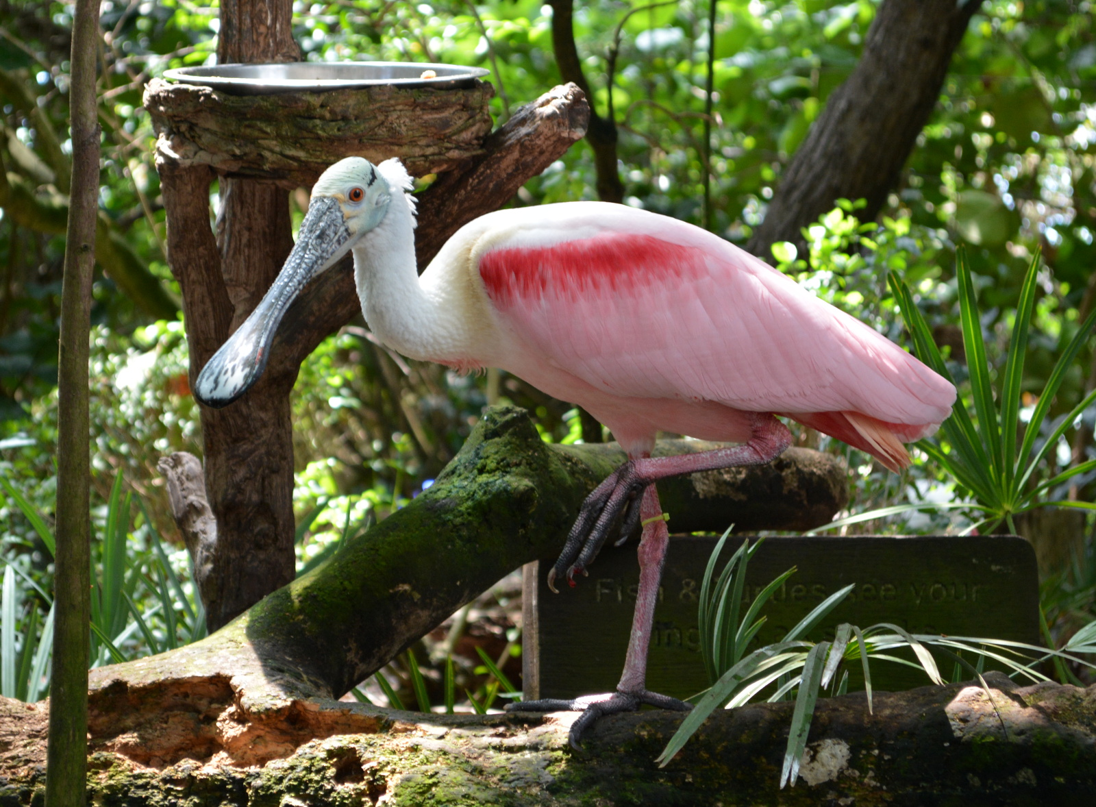 cozy birdhouse | roseate spoonbill at the florida aquarium