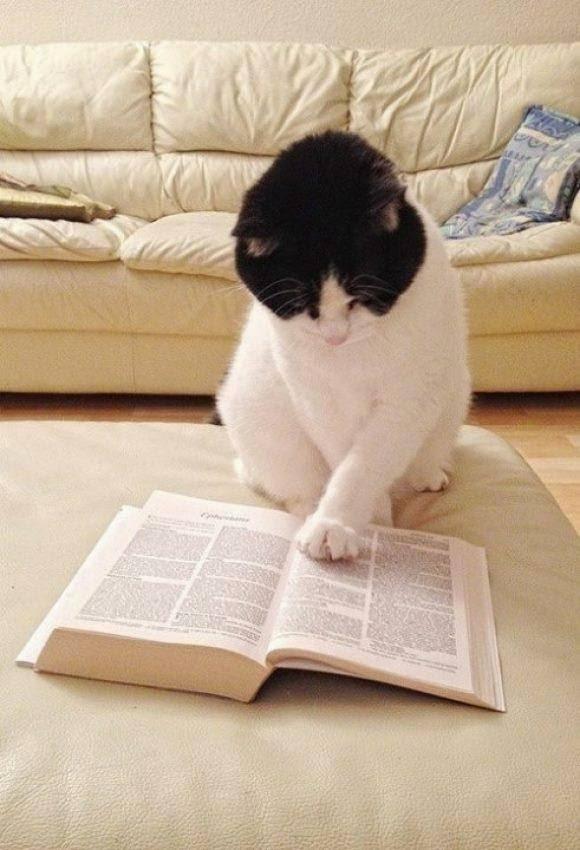 Cats, Cats, Cats ^^