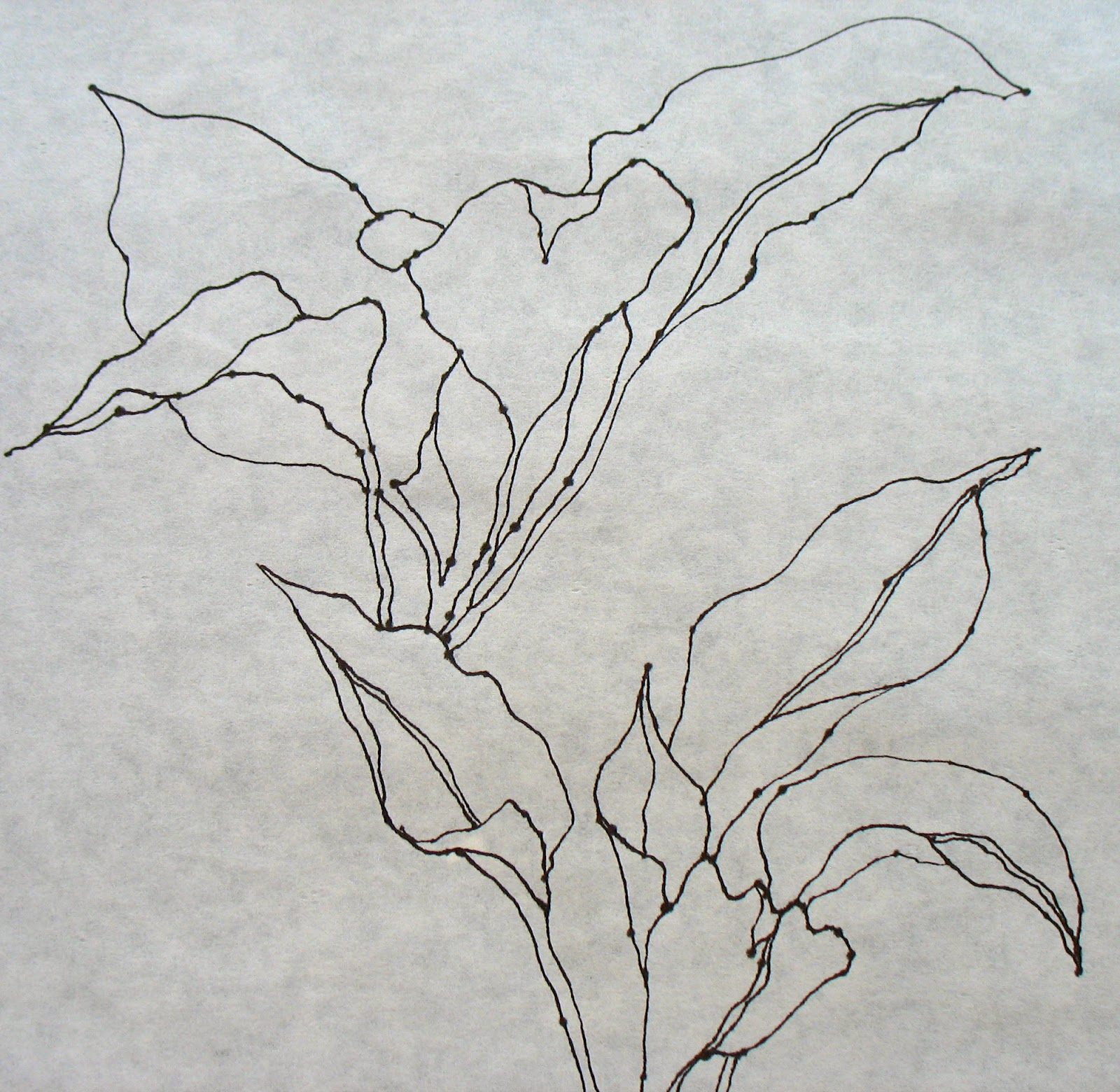 Contour Line Drawing Of A Plant : The painted prism sketchbook assignment contour drawing