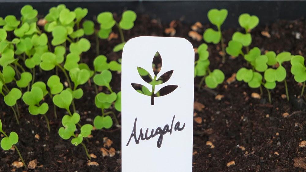 Plant markers, herb garden, vegetable garden, eco garden solutions, herb garden, plant markers