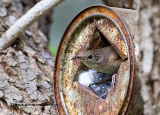 Nidos para Aves con Latas Recicladas