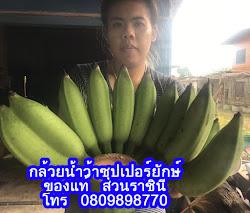 กล้วยน้ำว้าซุปเปอร์ยักษ์