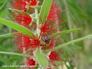 susis basteltipps mit stampin up: filigrane rote Blüte