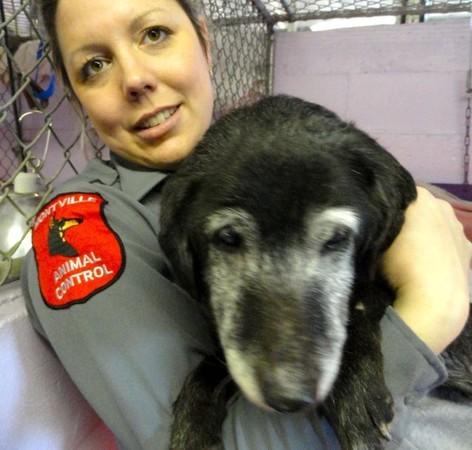 Brittany Dog Kennel Montville Ohio