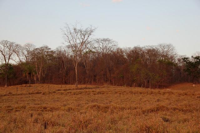 Paisagem do Cerradão na estação seca as árvores parecem mortas, mas, estão vivas e com as primeiras chuvas elas rebrotam com todo o  verde.