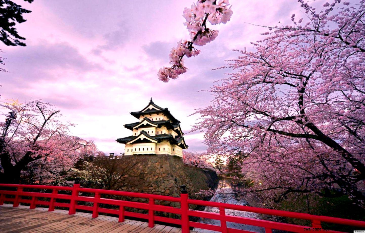 Japanese Cherry Blossom Trees Bursting Into Bloom Make Us