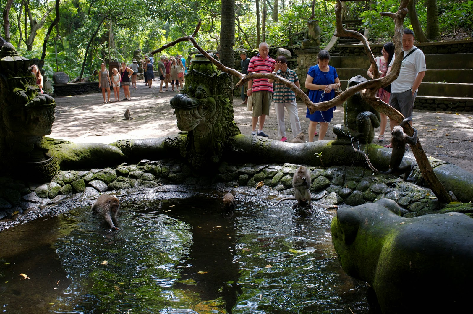 Bali Attractions: Ubud Monkey Forest2