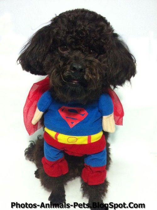http://3.bp.blogspot.com/-n8nLTHXgtDs/TxGoBvk9wXI/AAAAAAAACpg/pjrT7aZLk-M/s1600/funny%2Bdog.jpg