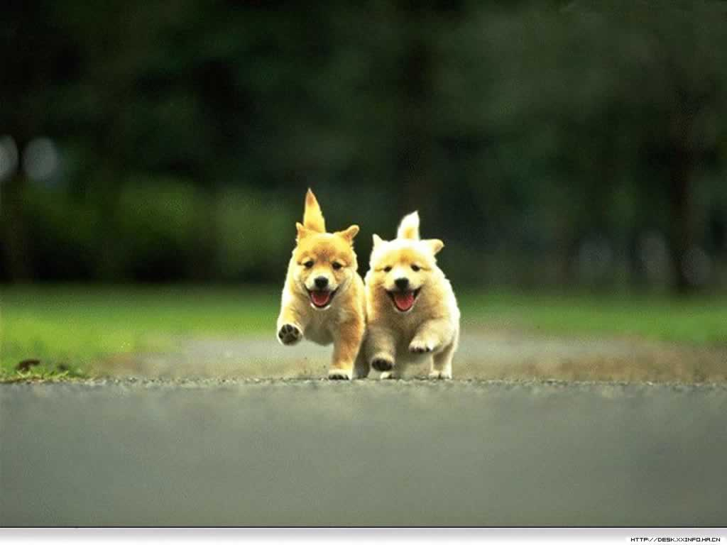 Cool Cute Dog Wallpapers