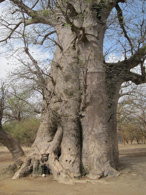 Cámara Funeraria en el interior de un baobab en Bandia