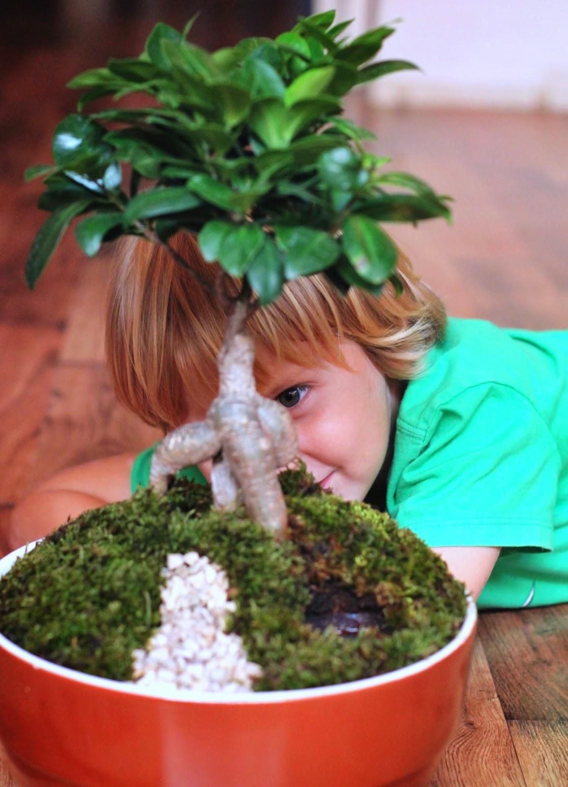 Как вырастить мох в доме 26
