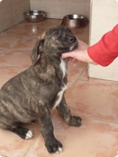 Puyol 3 meses Adiestramiento canino a domicilio en Alicante