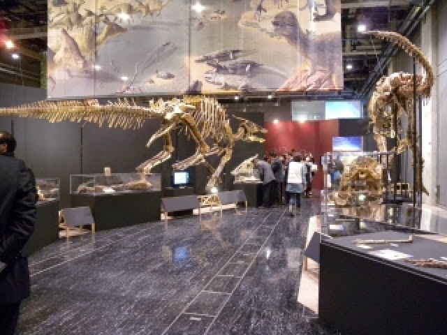 Mongolian dinosaur exhibition opens in Japan