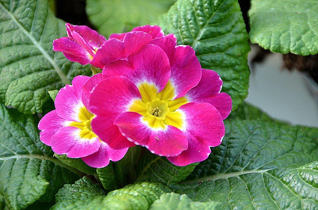 Floraciones en m laga y m s enero en viveros serrano for Matas de viveros