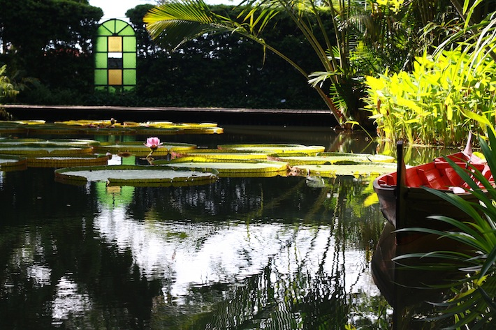 jungle pond with wooden boat and giant lily pads at penang tropical spice garden