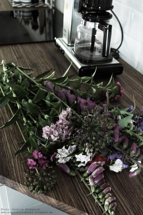 blommor från trädgården, sommarblommor, sommar, sommaren, blommorna,