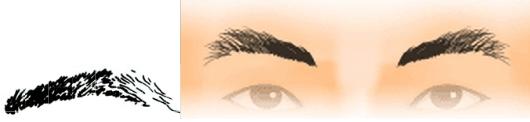 Tiền thanh hậu tán mi: đầu mọc dày đuôi tán