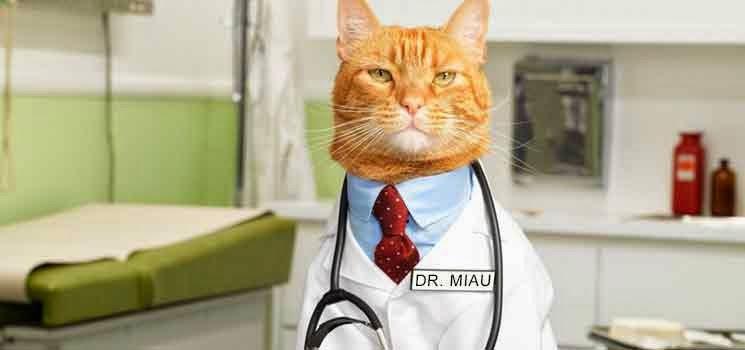 Kucing berpakaian doktor
