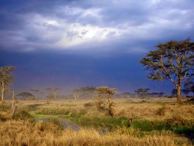 4. Serengeti Migration (Nairobi, Kenya)