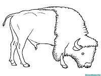 Mewarnai Gambar Bison Mencari Rumput Untuk Dimakan
