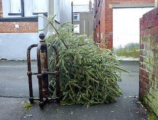 sad dead christmas tree in rain