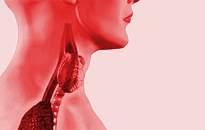 4 Jenis Makanan Yang Sanggup Atasi Gangguan Tiroid Pada Tubuh